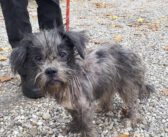 Verwaarloosde hond aangetroffen en noodgewongen ingeslapen, politie zoekt eigenaar